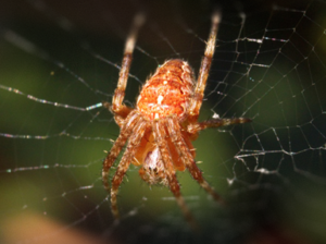 Corson Johnson Law is a sponsor of Pesticide.org and their work to educate the public about the benefits of spiders.